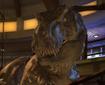 Le plein d'images qui bougent pour le jeu Jurassic Park